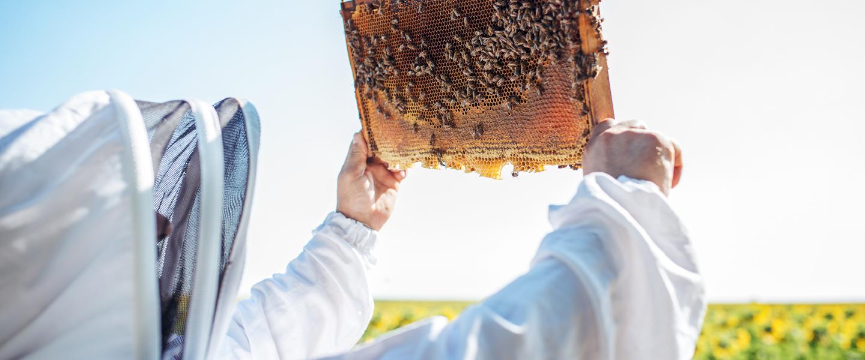 Fondant pszczeli niebieski   Podstawowe informacje