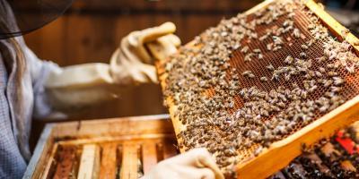 Fondant pszczeli z prebiotykiem   Podstawowe informacje