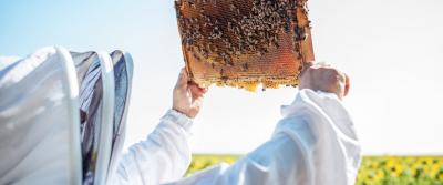 Fondant pszczeli niebieski | Podstawowe informacje
