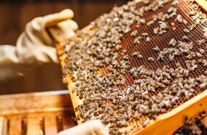 Produkty dla pszczelarzy